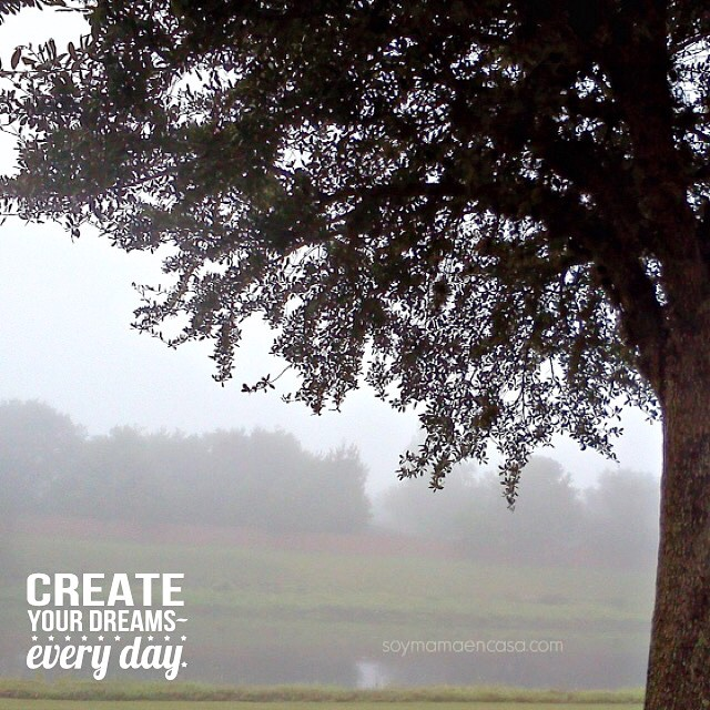 Un día nublado en #Florida ⛅️⛅️⛅️ #words #tree #nature #naturelover…